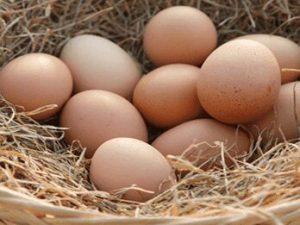 buy online eggs in Kolkata